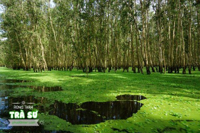 Thảm thực vật xanh mướt trong Rừng Tràm
