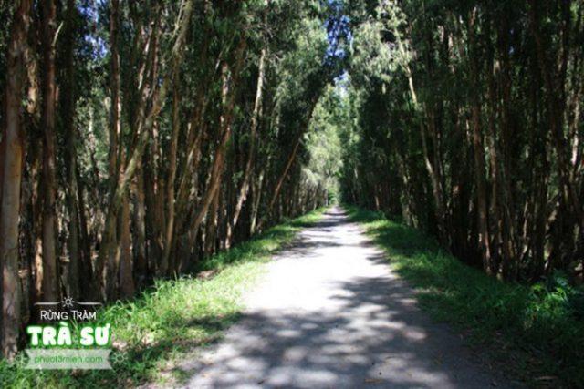 Đường vào khu rừng tràm