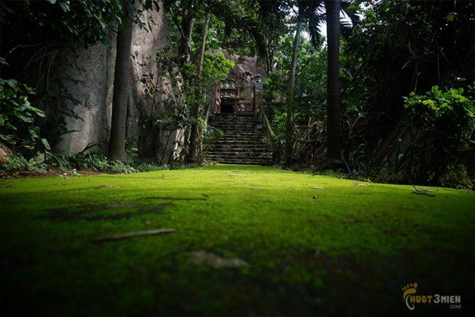 thảm thực vật xanh