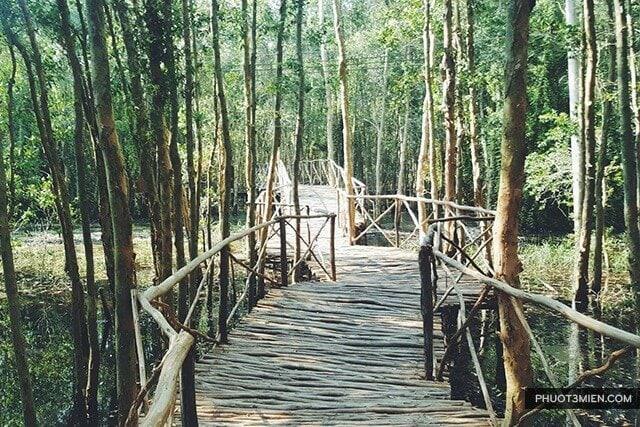 Cầu gỗ bên trong Rừng Tràm Tân Lập