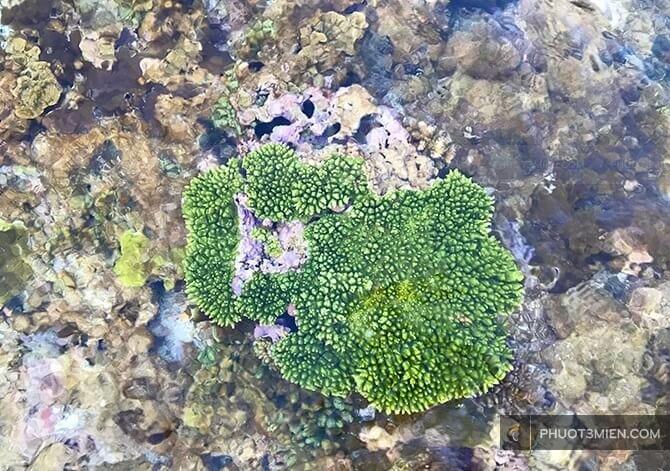 lặn ngắm san hô ở Lý Sơn
