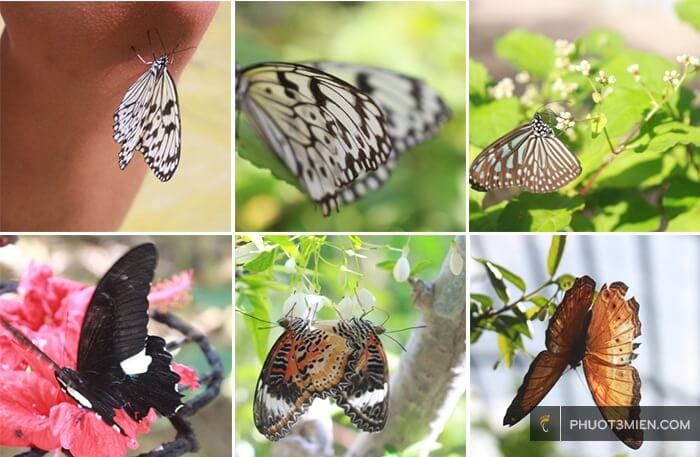 vườn bướm penang