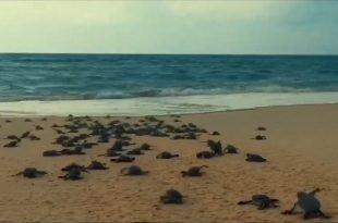 rùa để trên hòn bảy cạnh