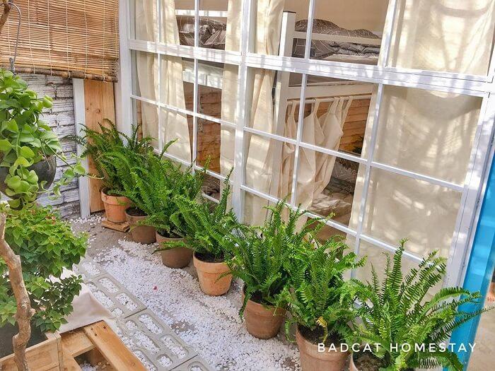 bad cat homestay cho thuê nguyên căn ở Phan Rang