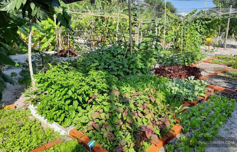 vườn rau tại homestay
