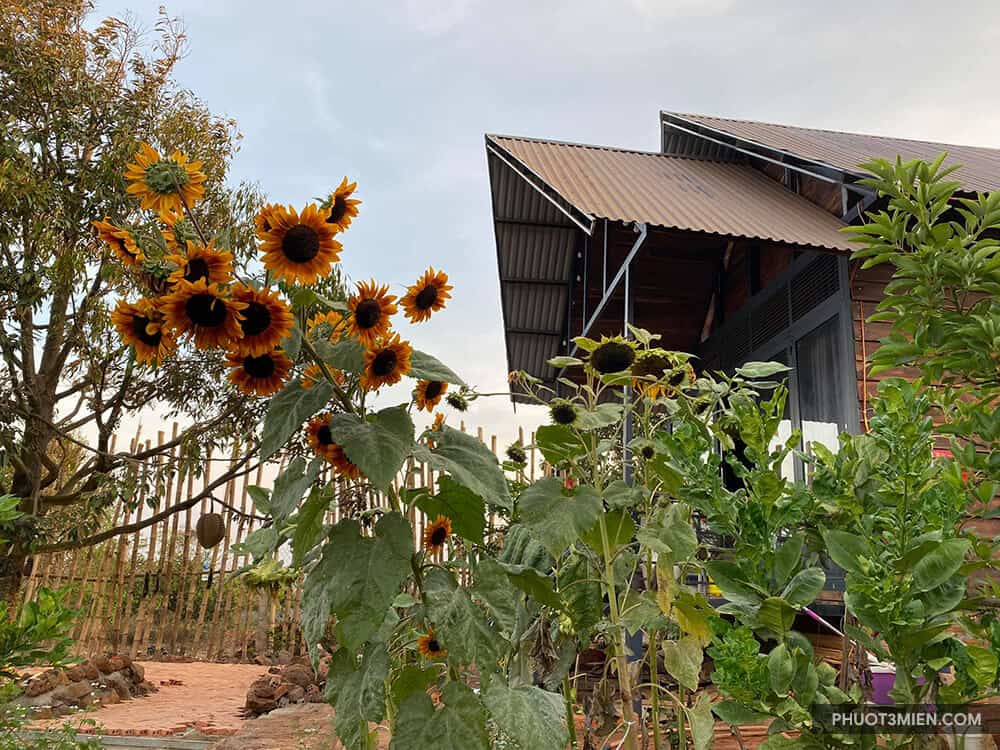 Queeny Farmstay Buôn mê
