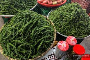 tiêu xanh được trồng tại Phú quốc