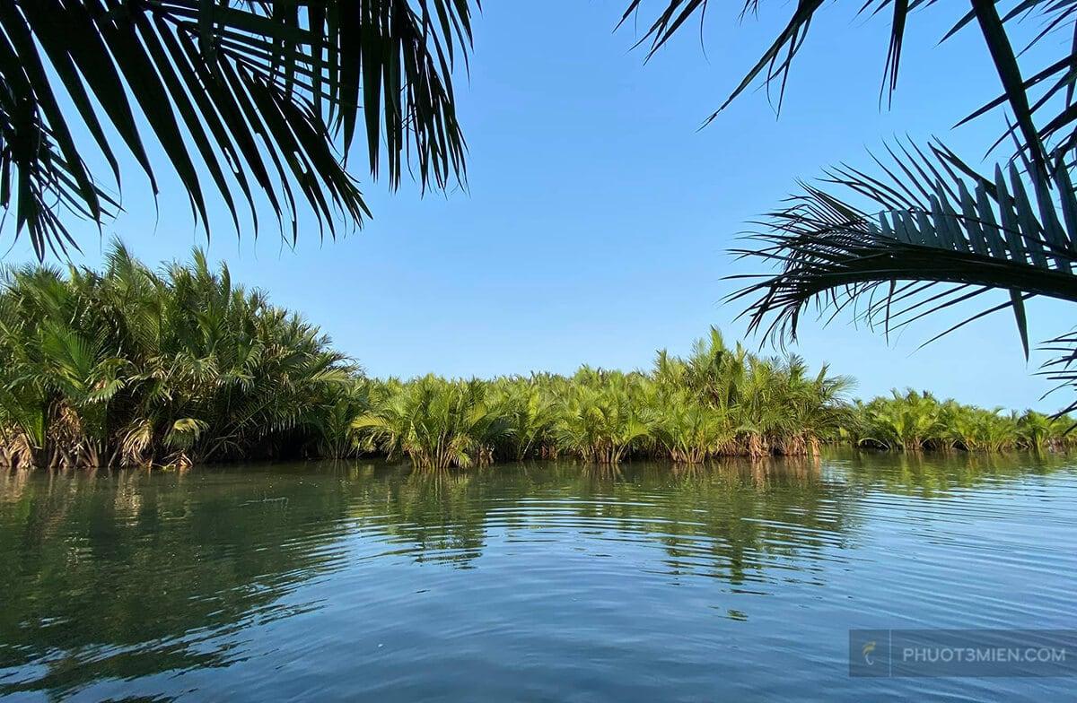 rừng dừa bảy mẫu cẩm thanh