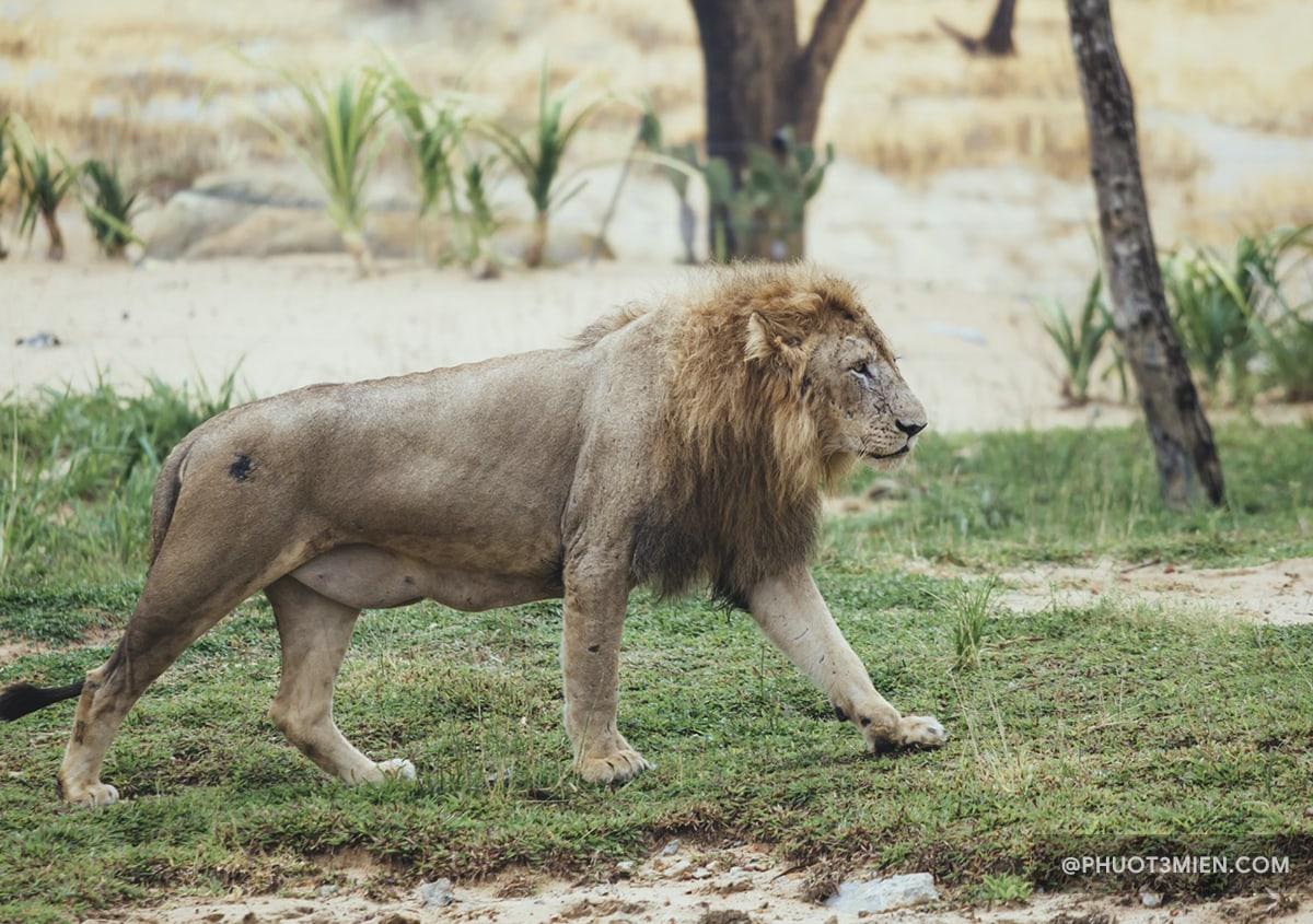 tham quan vườn thú safari tại vinwonder hội an