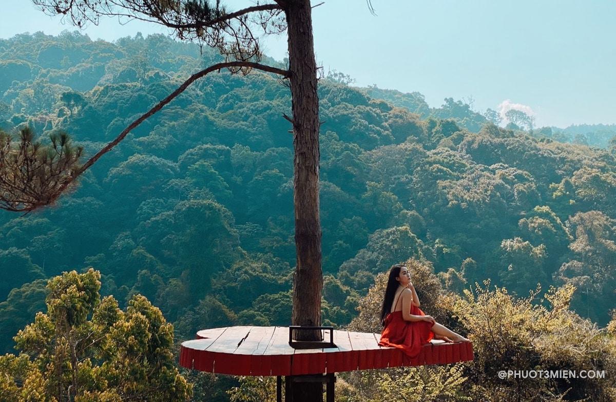 cây cô đơn ở Hoa Sơn Điền Trang