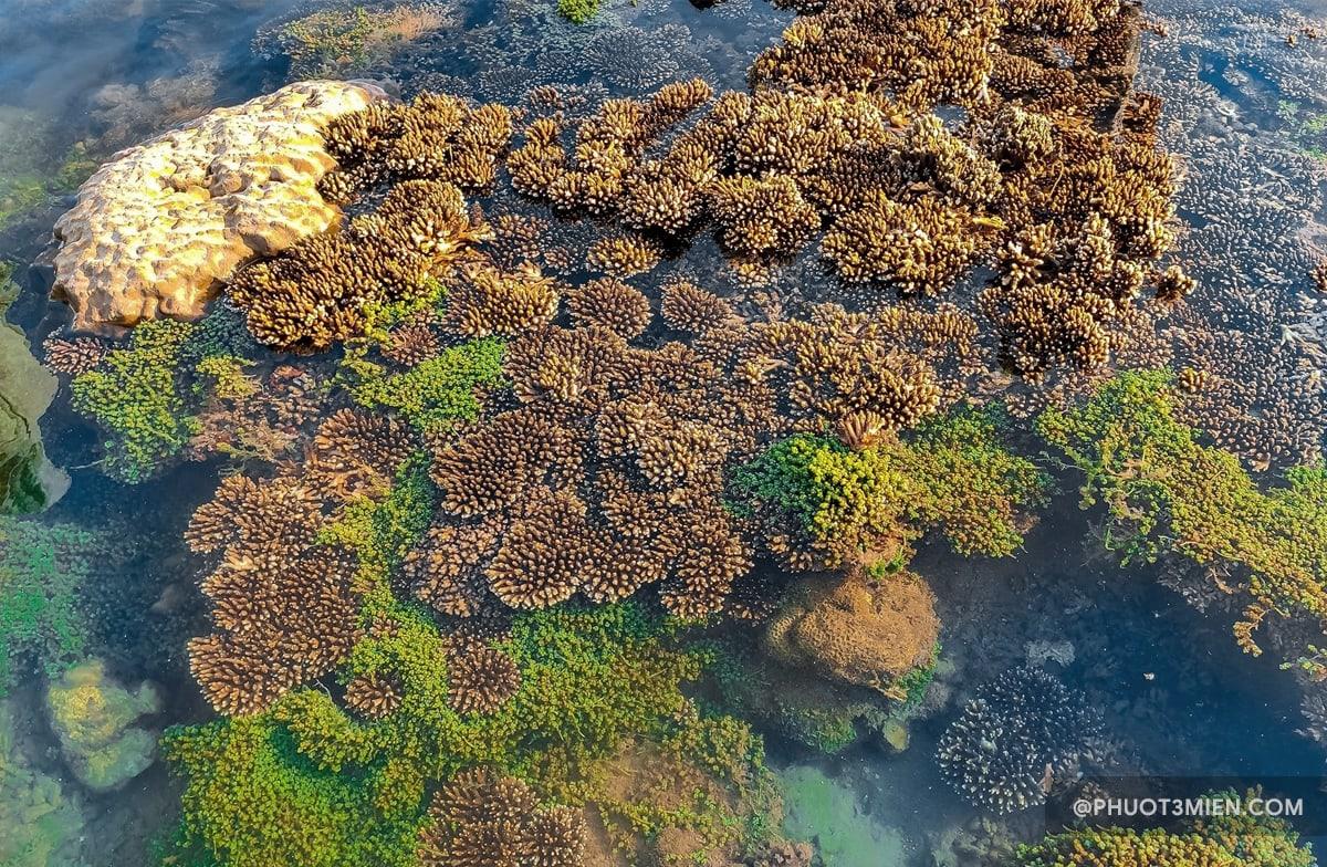 rặng san hô tại bãi đá obama