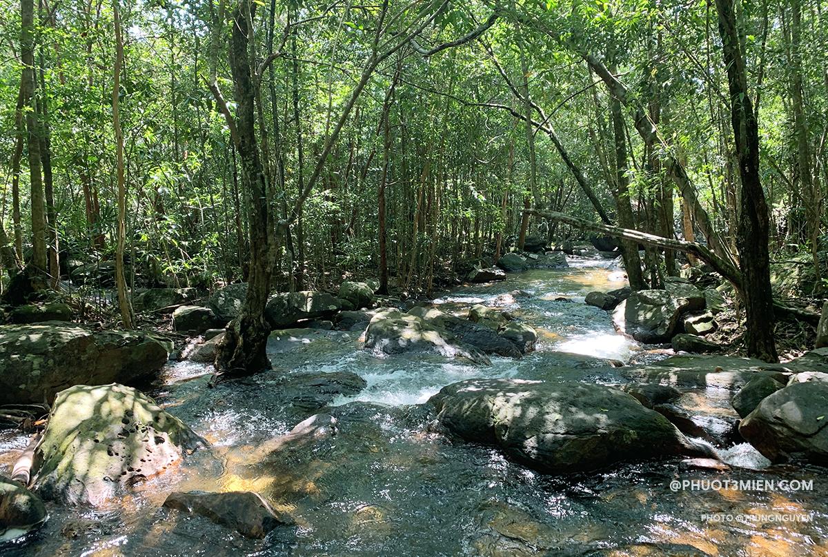 Dòng suối dưới tán rừng