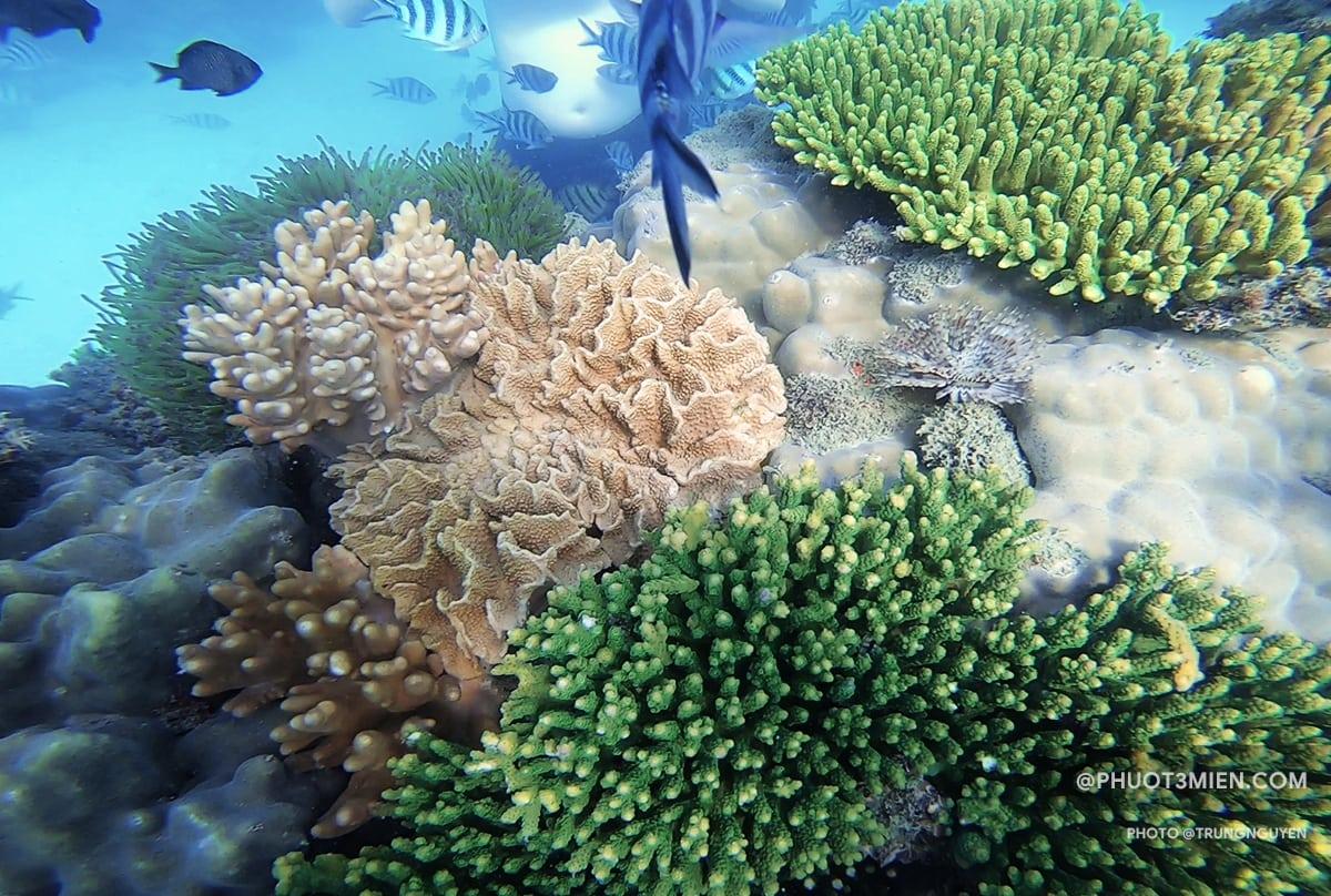 Đi bộ dưới biển ở công viên san hô Namaste