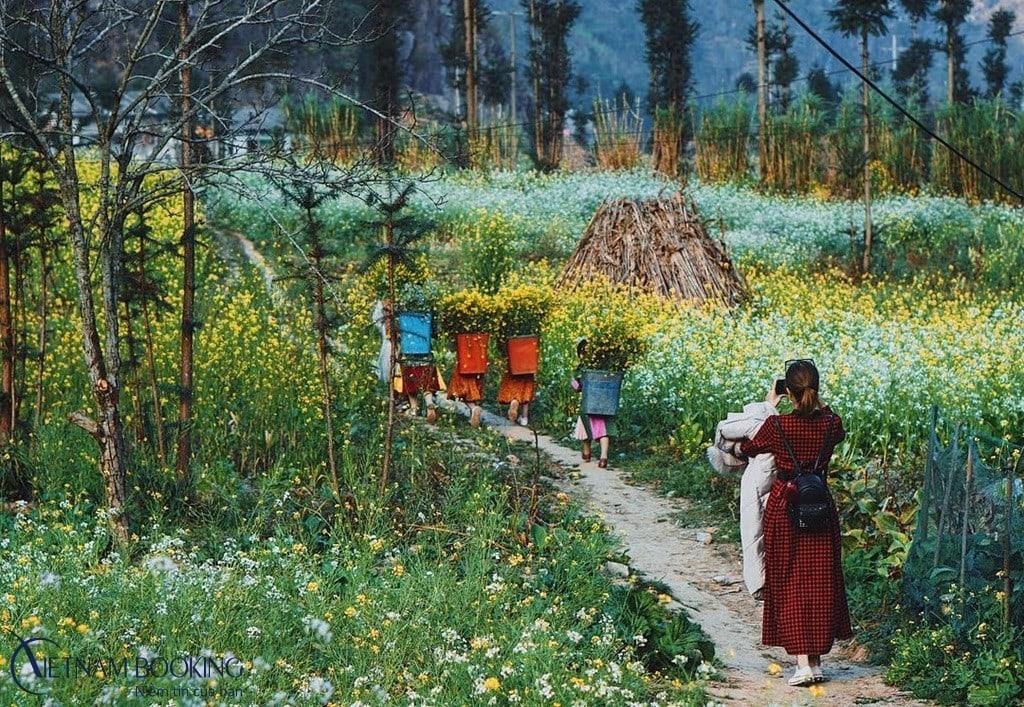 Hà Giang những mùa hoa đẹp đến nao lòng. Ảnh: Internet