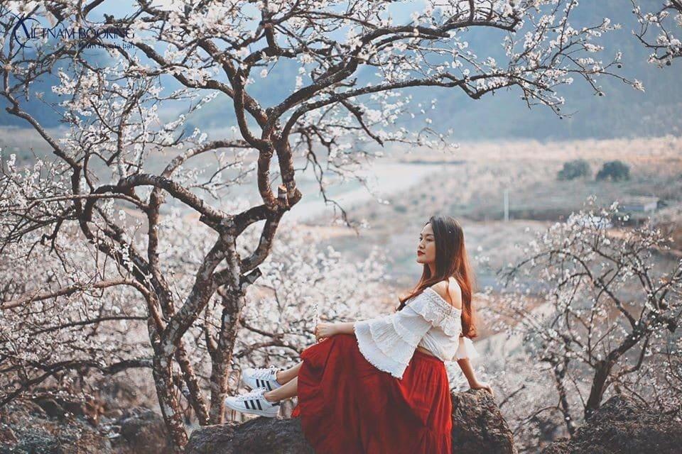 Màu sắc trắng muốt, kiêu sa của những nhành mận trắng làm núi rừng Tây Bắc như dịu dàng đi. Ảnh: ST