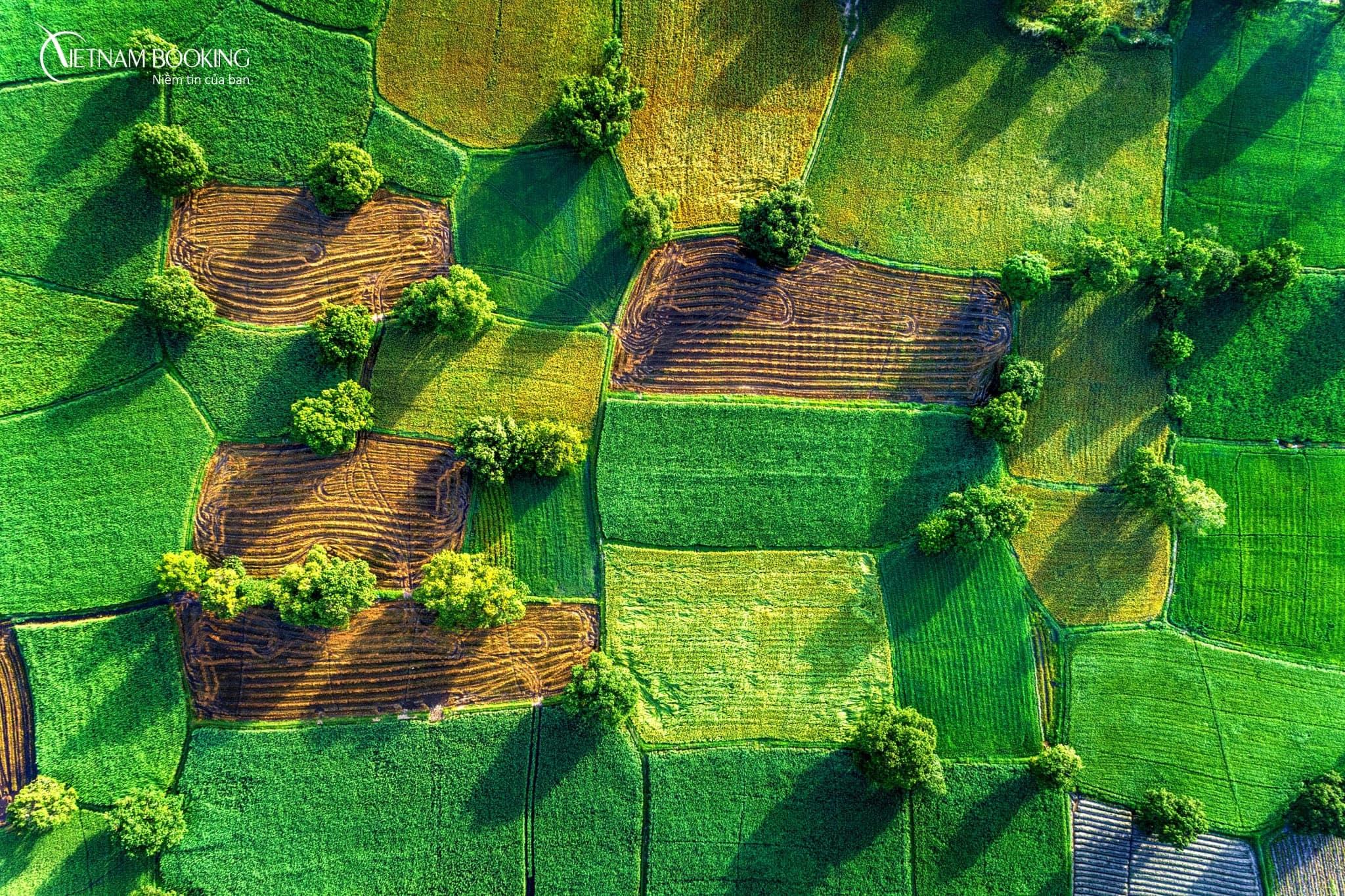 Nằm thiếp nơi những cánh đồng xanh, có đàn cò trắng và giấc mơ trưa yên bình. Ảnh: ST