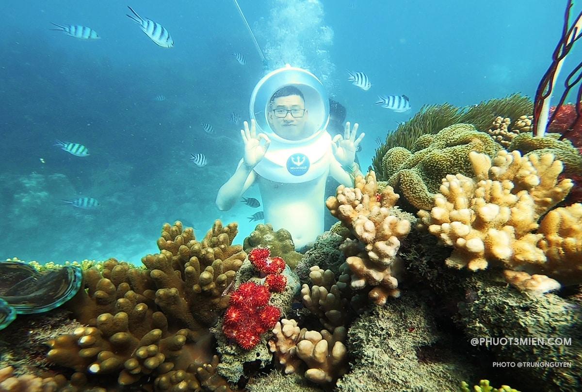 lặn ngắm san hô dưới nước