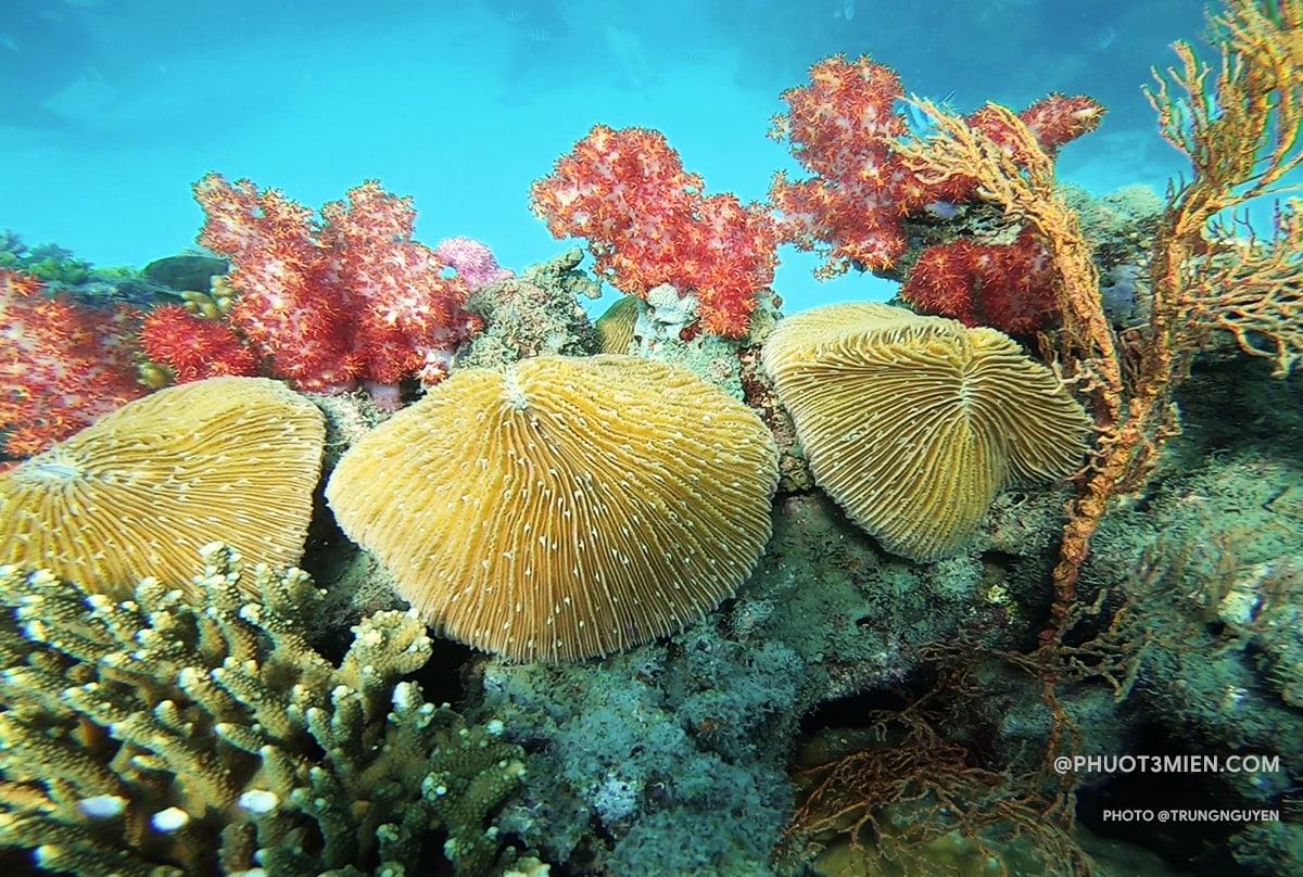 san hô ở công viên Namaste
