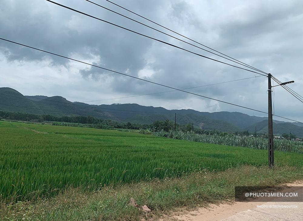 Cánh Đồng Lúa Thôn Chầm