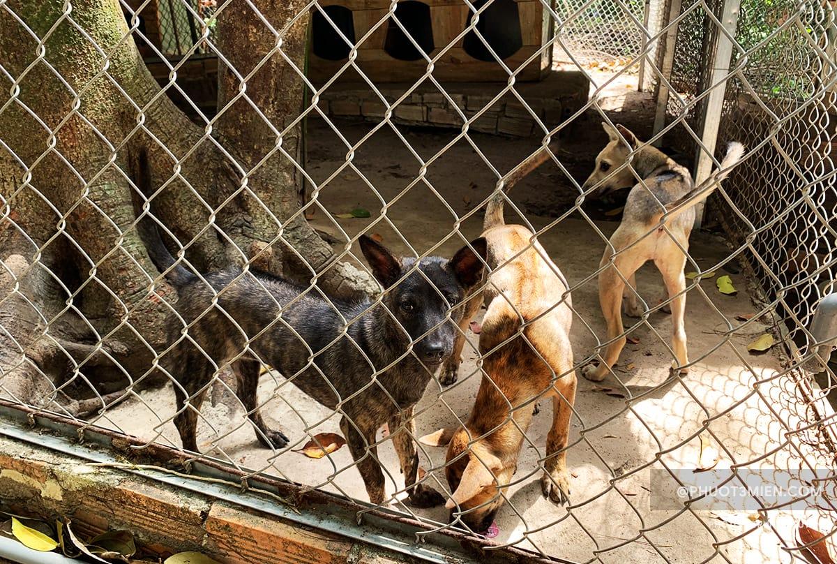 chuồng nuôi chó từ 5 tháng đến 1 năm