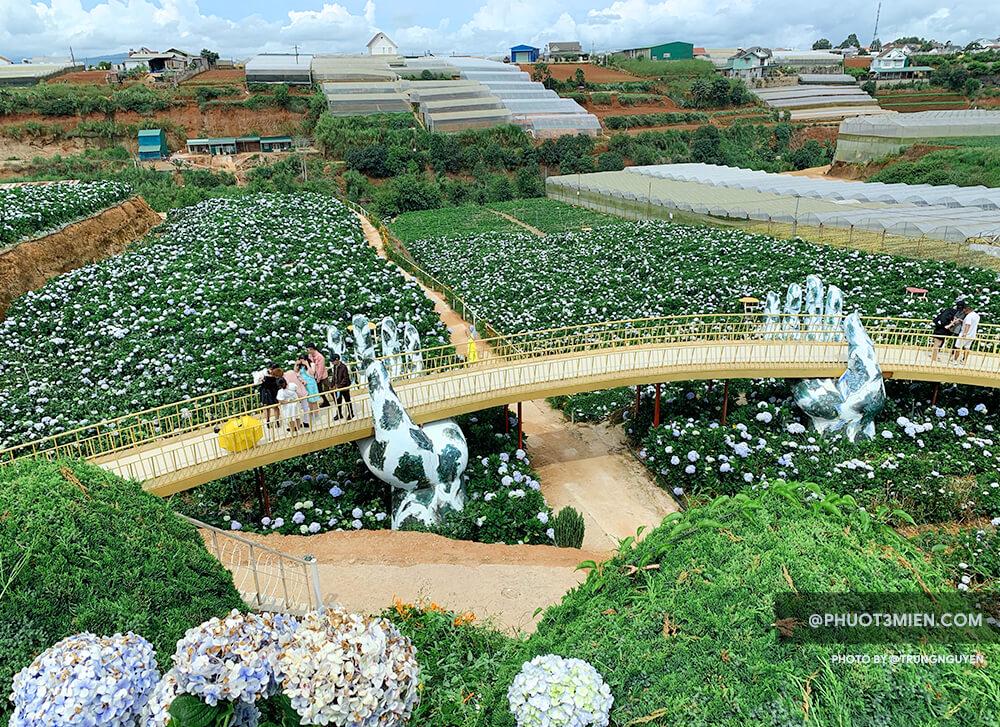 Vườn Hoa Cẩm Tú Cầu Trại Mát
